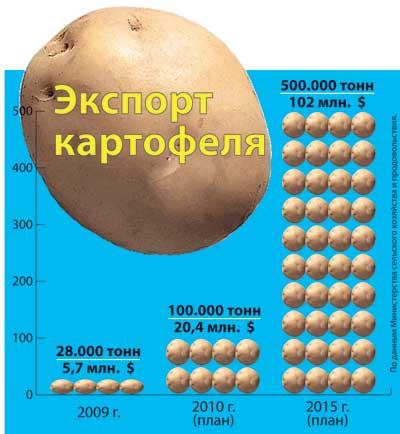 экспорт картофеля