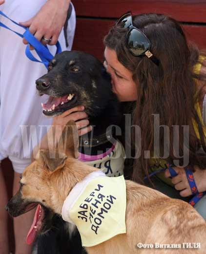 Акция в поддержку бездомных животных
