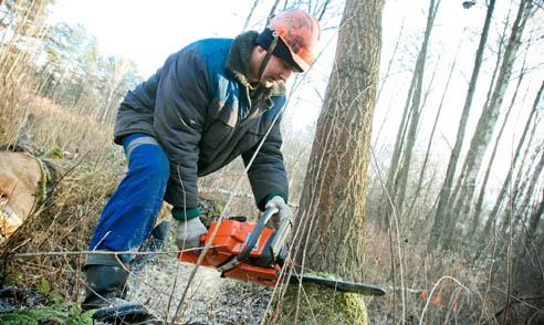 Леса Могилевской области наиболее пострадали от ураганных ветров