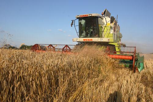 В Беларуси намолочен первый миллион тонн зерна