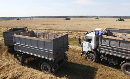 К уборке урожая в Беларуси подключились военнослужащие