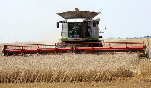 Белорусские хлеборобы намолотили более 5 миллионов тонн зерна