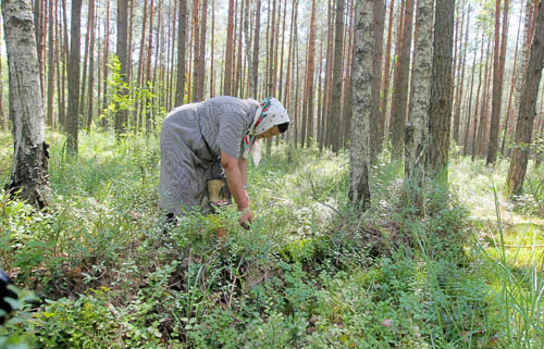 В нескольких областях страны введен запрет на посещение лесов