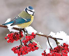 что зимой страшней для птицы
