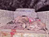 Подробности громкого дела о браконьерстве