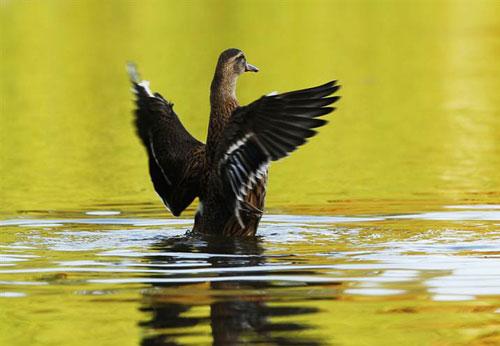 В рамках праздника «День птиц» 5 апреля в зоопарке Гродно пройдет конкурс красоты среди птиц, а также состоится много других увлекательных конкурсов о птицах