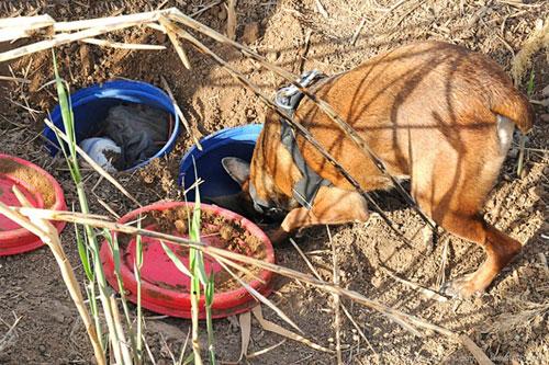 В тайнике в Лидском районе найдено почти 30 кг тротила