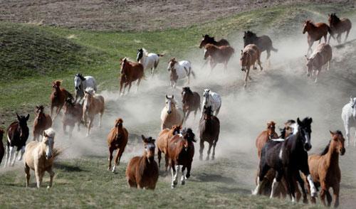 Табун лошадей был обнаружен пограничниками утром в воскресенье, 9 февраля, в Каменецком районе