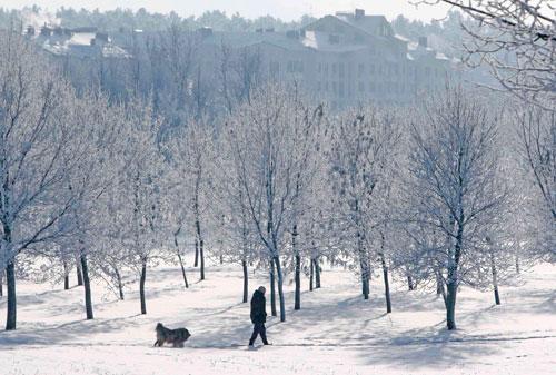 зима мороз парк иней