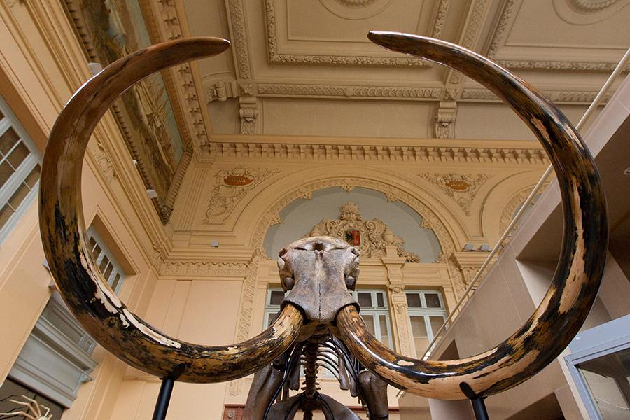 ВоФранции практически за €550 тыс. был продан скелет мамонта изСибири