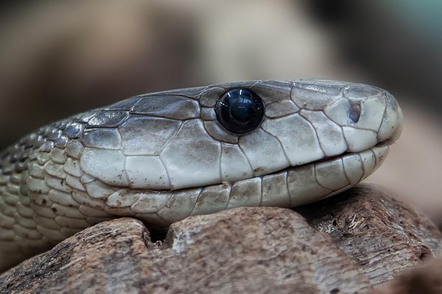 Стюардесса изсоедененных штатов поймала змею всамолете