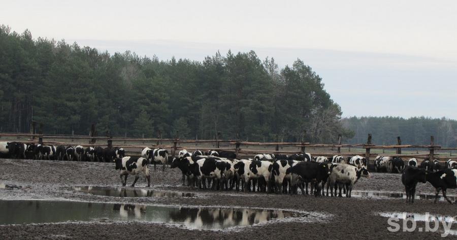 Ферма всего в нескольких метрах от леса