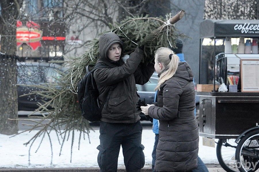Белорусы приобрели улесхозов неменее 151 тысячи новогодних елок исосен