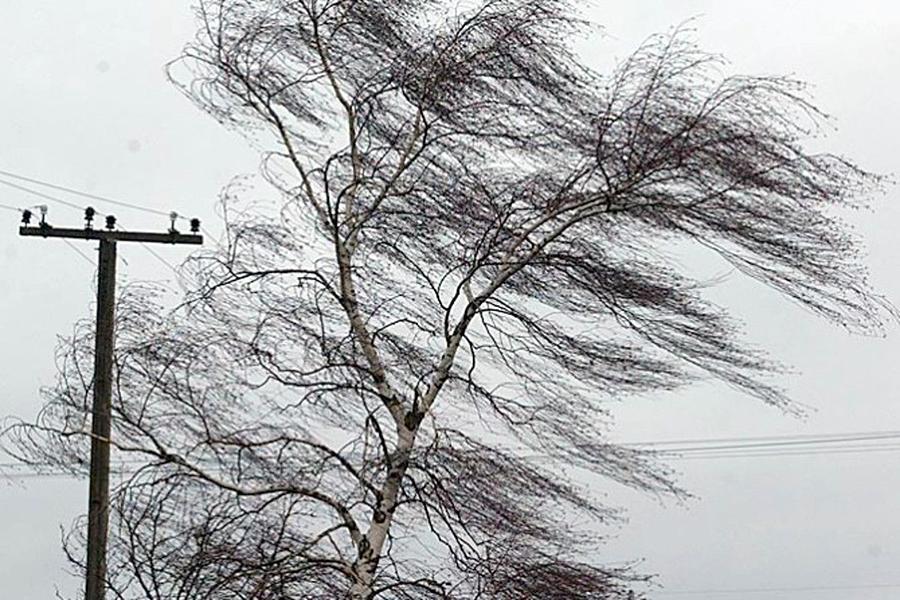 Шесть человек пострадали из-за сильного ветра в российской столице
