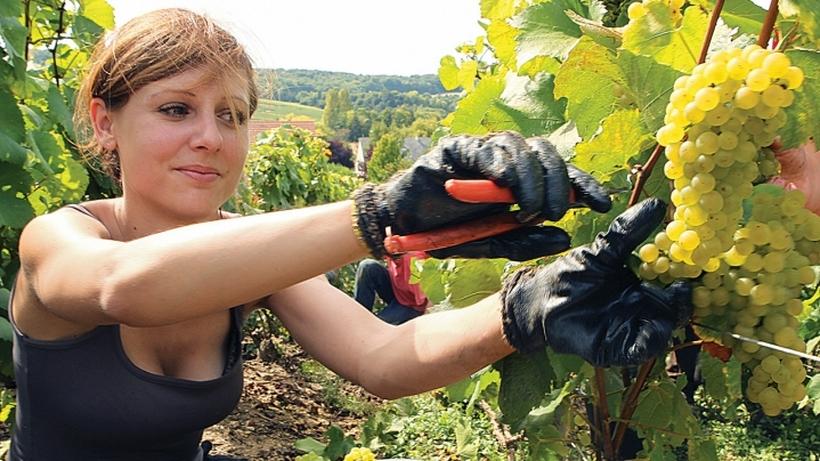 Поляки изменят правила трудоустройства для украинцев