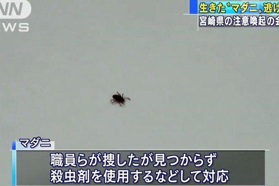 Как в«ужастике»: отяпонских ученых убежал клещ-убийца