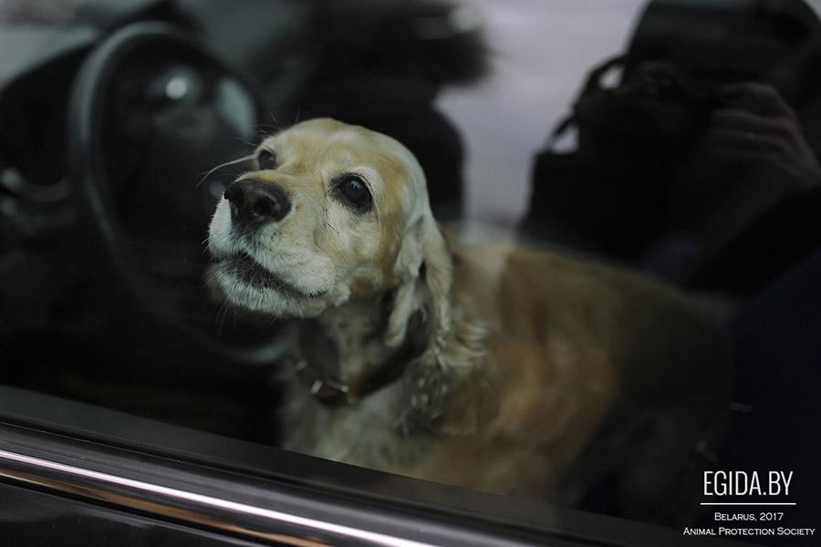 На стоянке гипермаркета вШабанах погибла запертая вмашине собачка
