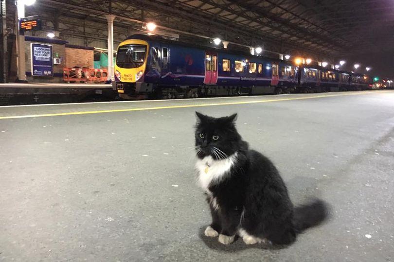 Вокзальная кошка стала звездой собложки журнала