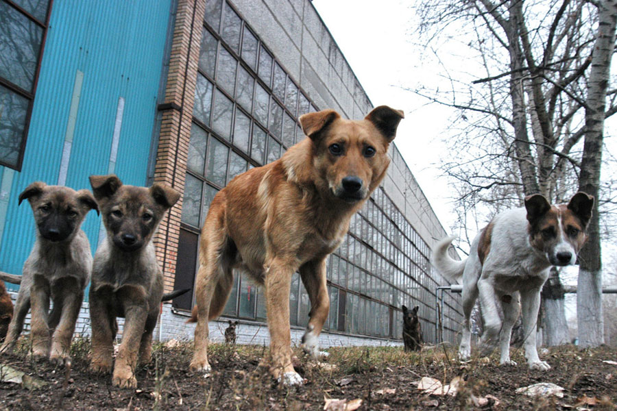 Установлен житель Каменецкого района, который убил пять собак
