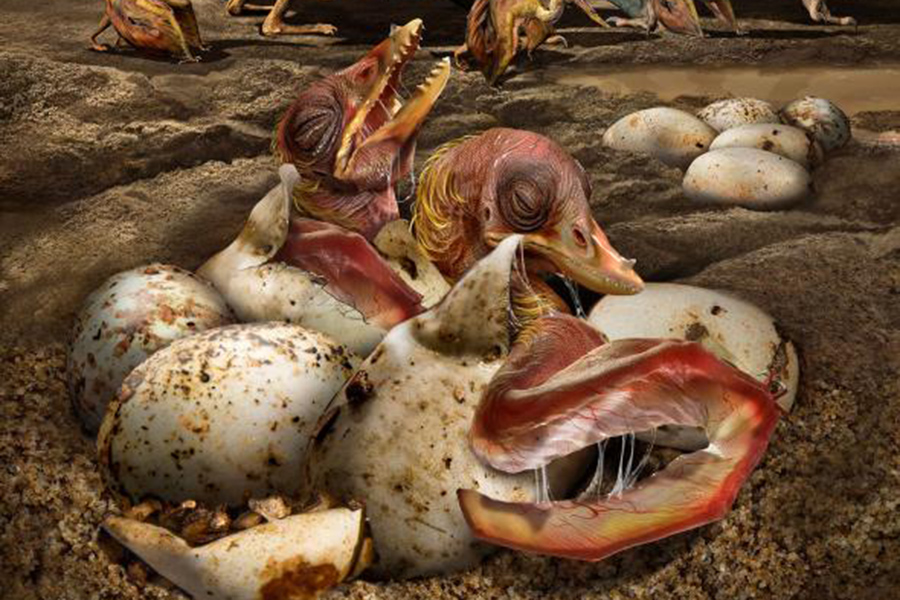 Ученые нашли крупнейшую в истории кладку яиц птерозавров