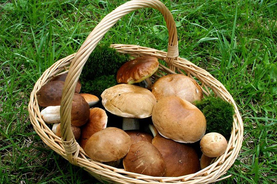 Где в Республики Беларусь растут самые «фонящие» грибы?