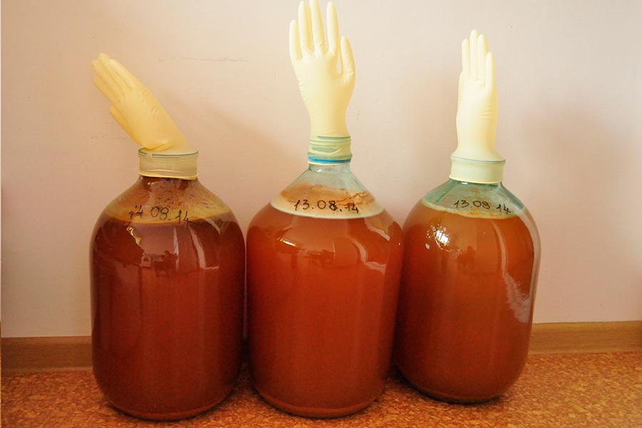 Как приготовит вино из яблоки в домашних условиях 56