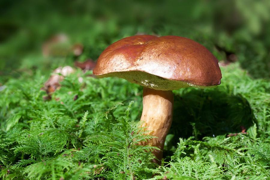 Шесть грибников пропали на Брестчине за сутки. Пятерых нашли, один погиб