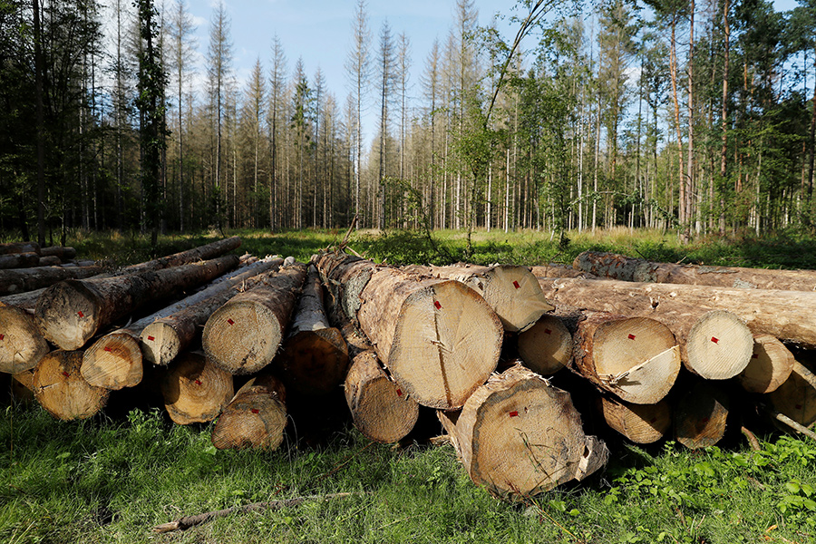В Ольшанах процветает нелегальная торговля древесиной