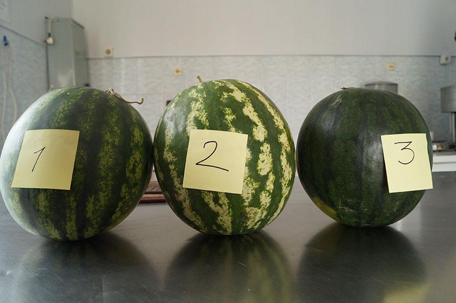 Супермаркет, рынок, развал - как мы проверили арбузы на наличие нитратов и радионуклидов
