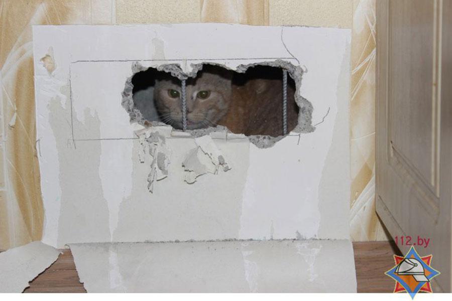 ВБресте спасали кошку, которая упала ввентиляционную шахту