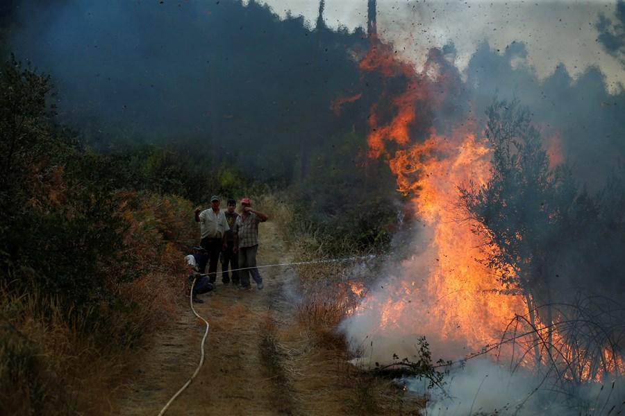 ВПортугалии из-за пожаров эвакуировали 10 населенных пунктов