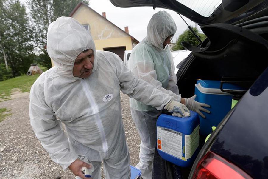 Польские власти построят стену награнице с государством Украина из-за чумы свиней