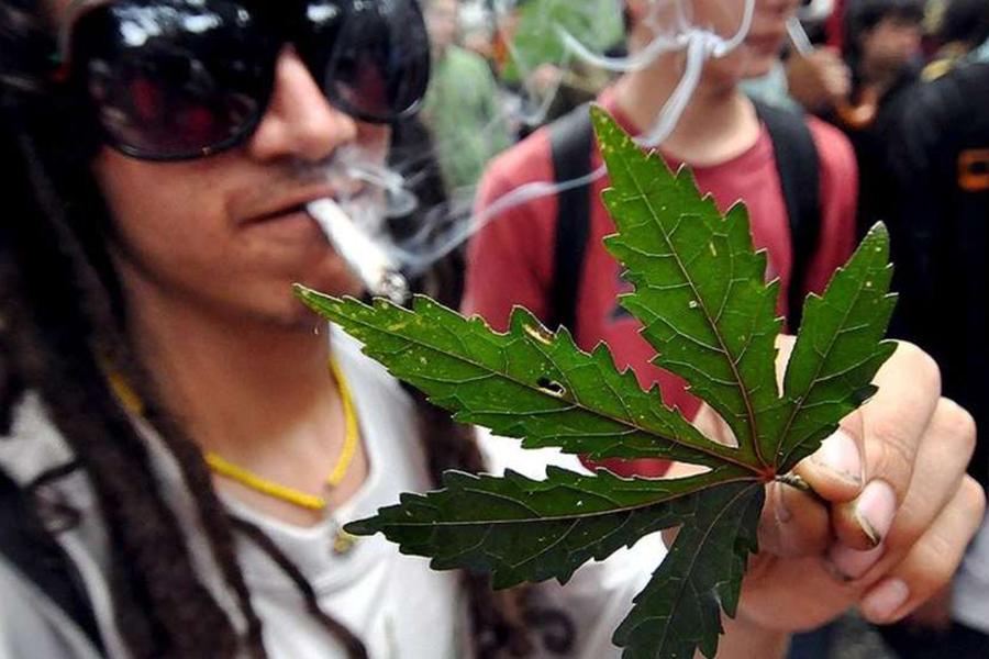 ВКалифорнии легализовали рекреационную марихуану