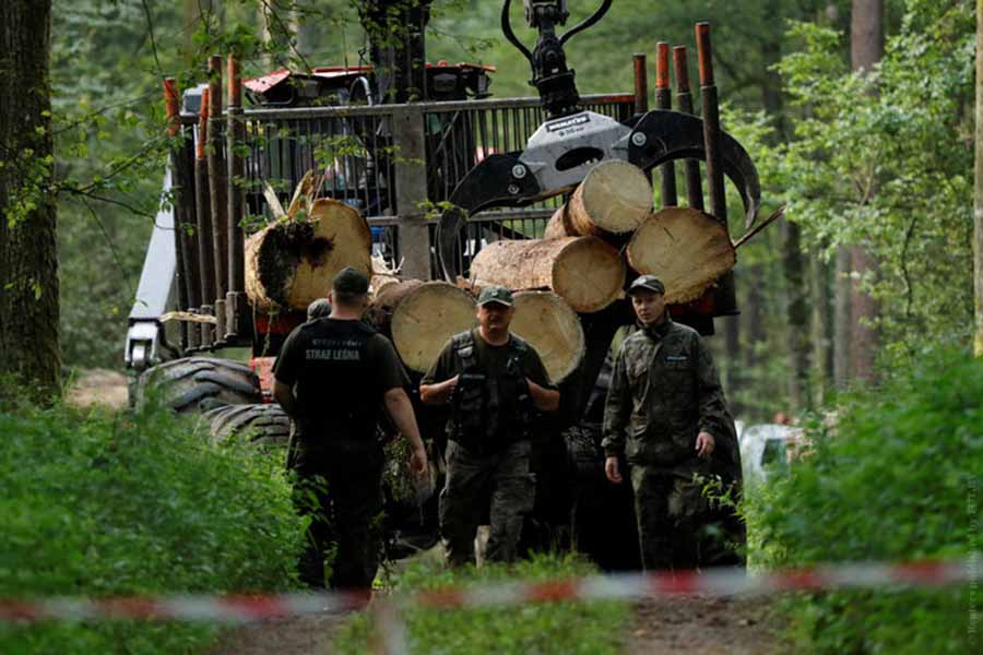 Поляки протестуют против вырубки Беловежской пущи