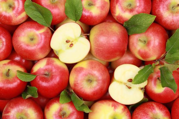 КНР накормит яблоками РФ и республику Белоруссию