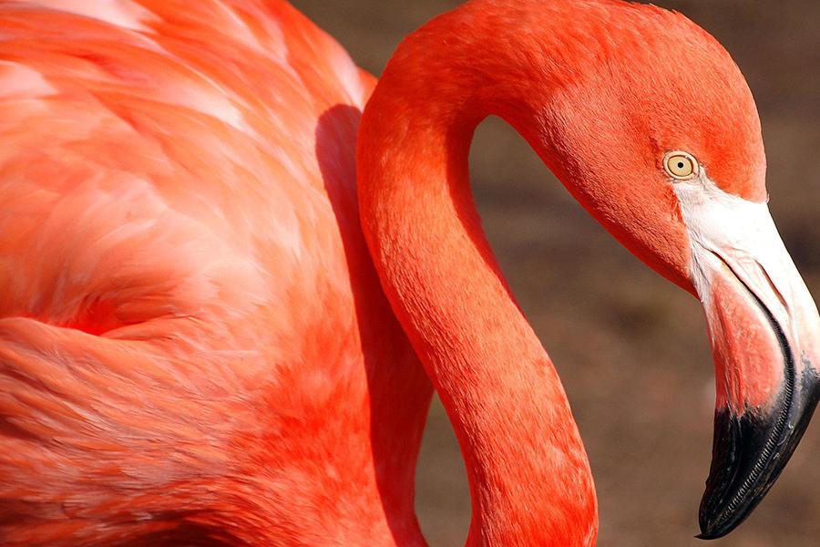 Экс-руководитель Минского зоопарка вместе с супругой приторговывал фламинго