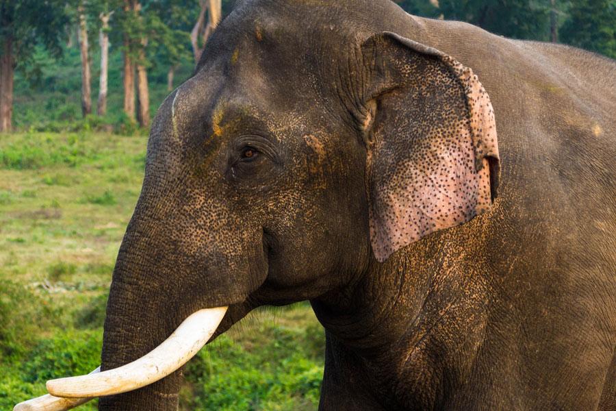 В Китайская республика дикий слон атаковал автобус спассажирами