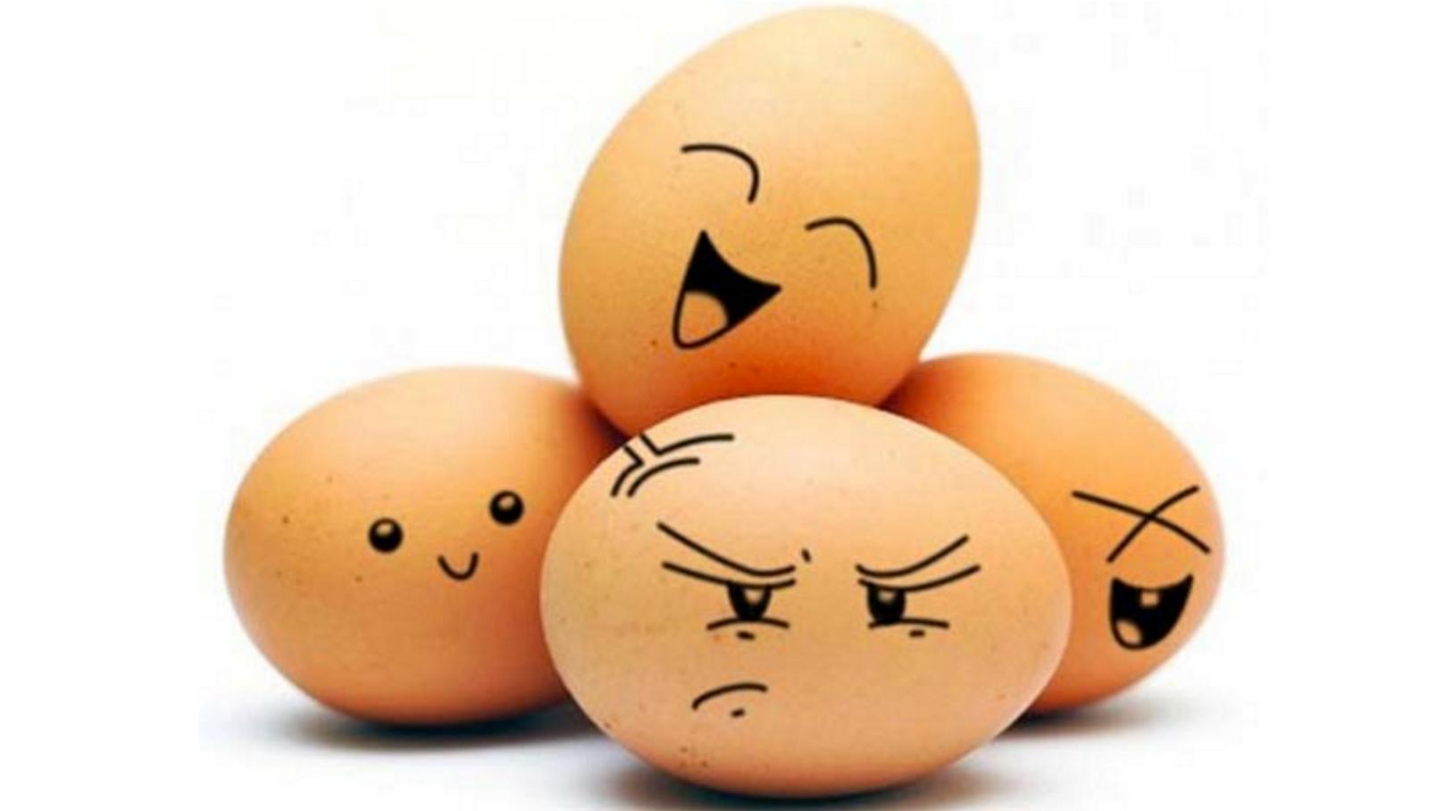 ВБельгии заявили, что знали оядовитых яйцах ещё виюне