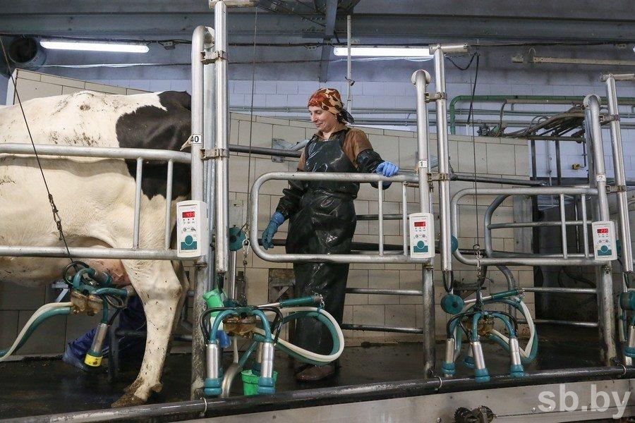 ЕЭК: Российские ограничения поставок молока из Беларуси имеют признаки нарушения договора о ЕАЭС