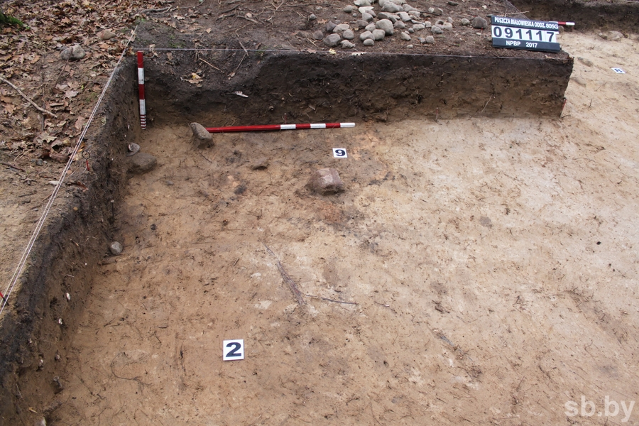 Находками каменного века завершились в Беловежской пуще первые белорусско-польские археологические раскопки