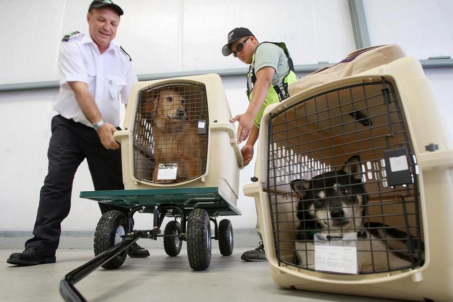 Милиция Бреста проводит проверку: кто и зачем вывозит наших домашних животных в ЕС