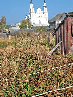 Подворья рядом с Белым костелом превратились в болото и поросли камышом.