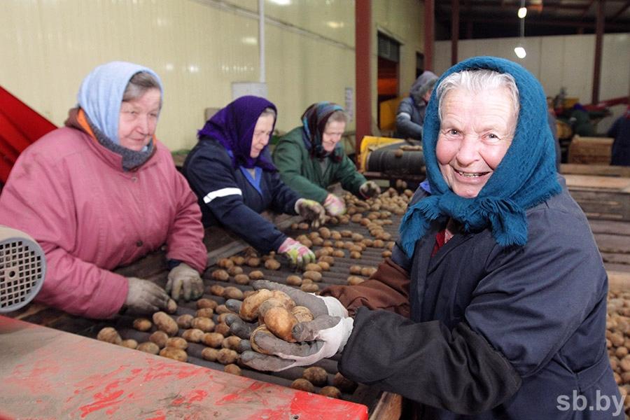 Республика Белоруссия отвергла обвинения вреэкспорте картофеля в Российскую Федерацию