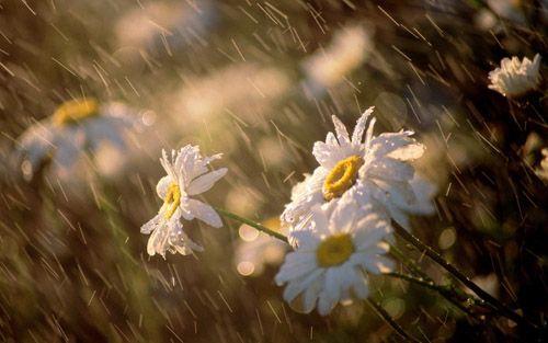 Переменная облачность, дожди игрозы— Погода насреду