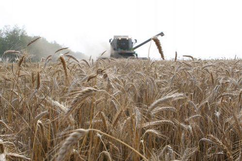 Урожай-2016 будет лучше, чем ожидалось - эксперты