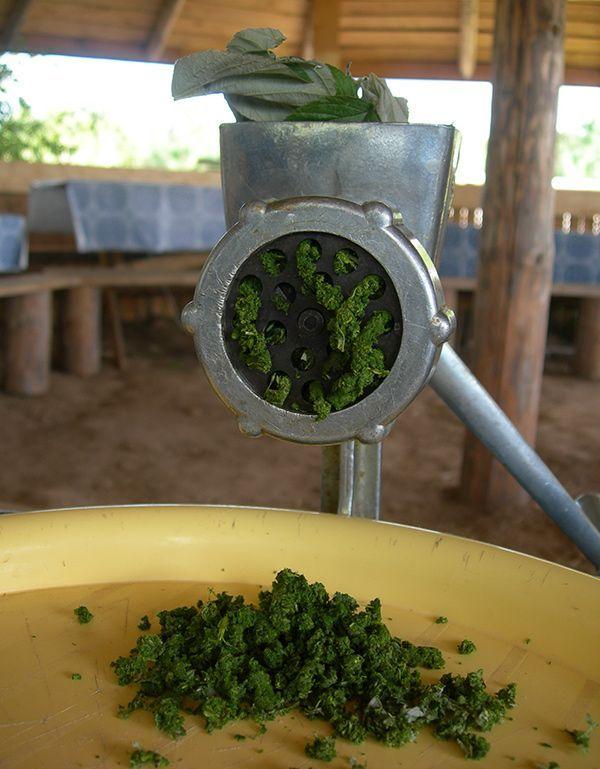 Как ферментировать листья вишни для чая