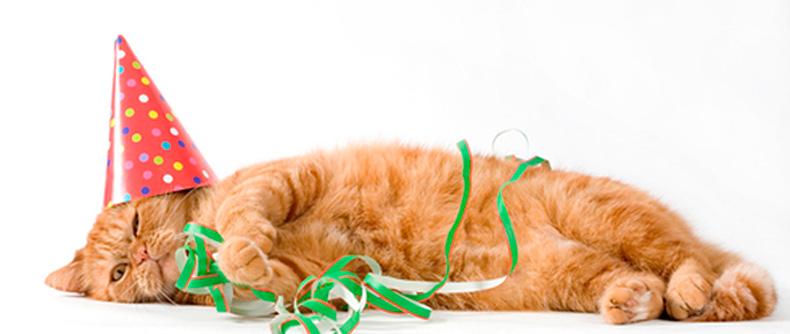 Картинка с днем рождения рыжий кот, картинки мультфильмов