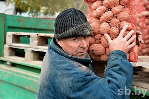 В Белоруссии накопали около 1 млн тонн картофеля
