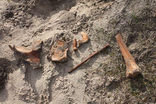 Лиса раскопала древнее поселение вблизи Беловежской пущи