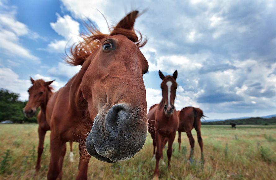 Табун лошадей пришел изПольши вБеларусь